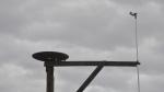 Dans les Barthes de l'Adour, Candresse accueille une nouvelle plateforme à cigognes