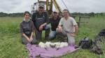 Recensement des Cigognes blanches nicheuses dans les Landes